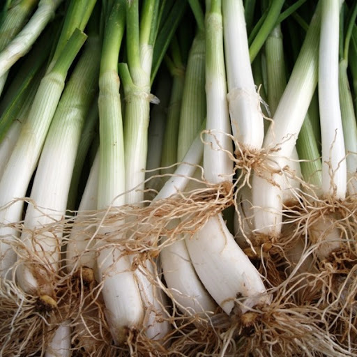 Calçot Onion