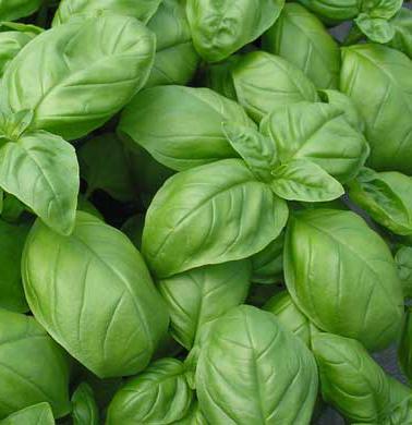Edible Greens